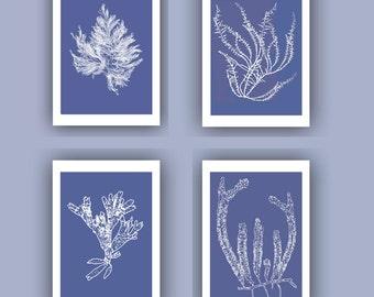 Ocean Pressed seaweed Print, Blue Sea grass  Set of 4 prints, Wall Decor,  Nautical art, Botanical Art Algae, beach cottage decor, SKU4sp