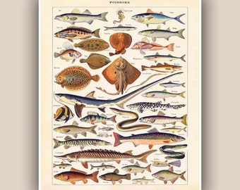 Fishes Print, Vintage 'Poissons' image, Seaside Prints, Marine Wall Decor,  Nautical art, Print 11'x14', beach cottage decor