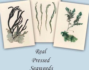 Original Seaweed Art, Nautical Decor Ideas, Botanical Wall Art, Set of 3 Artworks, LP149
