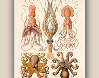 Cephalopods Print, octopus, squids Vintage illustration, Seaside Prints, octopus poster Marine Decor,  Nautical art, Print 11x14, beach art