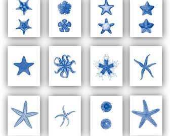 Starfish Prints, Make your own display, Collection Ocean star fish, Nautical Art, beach cottage decor, sea life art, Sea star print 5x7