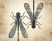 6x6 Insect Print - Damselfly