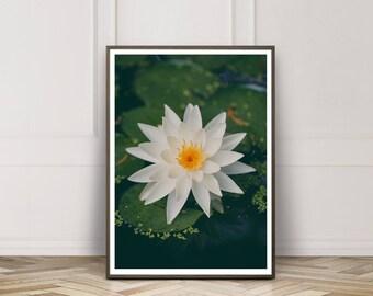 Fine Art Print, Lily Art, White, Water Garden, Lily Pads, Lily Flower, Waterlily, Flower Art, Botanical Print, Home Decor, Wall Art