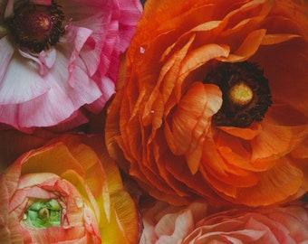 Fine Art Print, Ranunculus Flowers, Ranunculus Print, Flower Art, Colorful, Floral Decor, Spring Wall Art, Botanical Print, Macro Flower Art