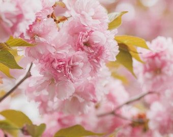 Fine Art Photo, Cherry Blossom Art, Floral Art, Pink, Spring Art, Flower Photo, Girls Nursery Art, Nature Art, Cottage Chic, Botanical Art