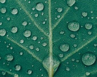 Fine Art Photograph, Green Leaf, Rain Drops, Nature Print, Tropical Art, Rain Imagery, Nature Wall Art, Green Art, Nature Home Decor