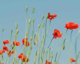 Fine Art Print, Poppy Flower Photograph, Flower Art, Orange Poppies, Floral Decor, Botanical Print, Plant Art Print, Modern Wall Art,