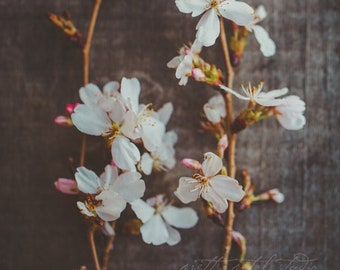 Fine Art Print, Cherry Blossom Art, Floral Art, Pastel Pink, Spring Art, Flower Photo, April, Nature Art, Cottage Chic Art, Botanical Art