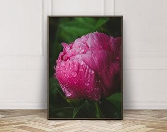 Fine Art Print, Peony Art, Flower Photo, Peony Photo, Raindrops, Garden Chic, Pink Art, Cottage Art, Floral Decor, Botanical Print, Bloom
