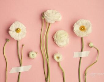 Flower Art | Botanical