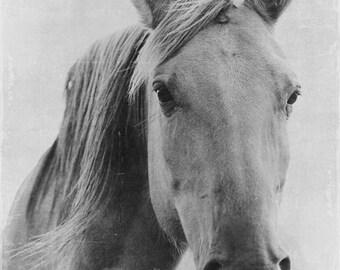 Fine Art Print, Horse Photo, Rustic Art, Equestrian Art, Horse Lover, Majestic, Farm Life, Animal Art, Horse Art, Black and White Photo