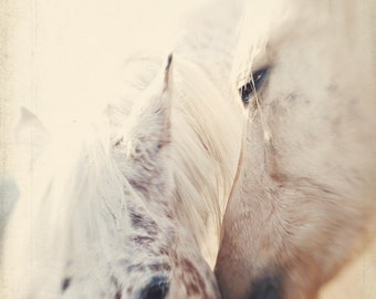 Fine Art Print, Horse Photography, Equestrian, Equine Art, White Horses, Love, Kiss, Farm Life, Horse Decor, Nature Art, Whisper, Square Art