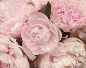 Fine Art Print, Flower Photo, Peony Photo, Pink, Petals, Pastel, Garden Chic Art, Spring, Cottage Art, Floral Decor, Botanical Print, Blooms