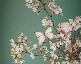 Fine Art Print, Cherry Blossom Art, Butterfly Art, Floral Print, Teal, Flower Photo, April, Nature Art, Cottage Chic Art, Botanical Art