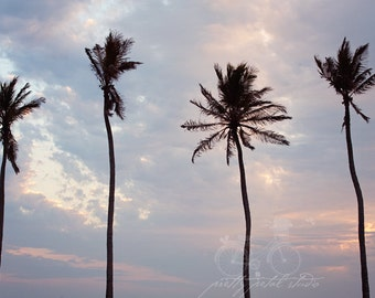 Fine Art Photo, Sanibel Art, Florida, Palm Tree Photo, Resort Art, Vacation, Summer, Sunset Photo, Beach Art, Coastal Decor, Palm Tree Art