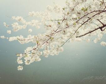 Fine Art Print, Cherry Blossoms, Branches, Floral Art, Pastel, Delicate, Flower Photo, April, Nature Art, Cottage Chic Art, Botanical Art