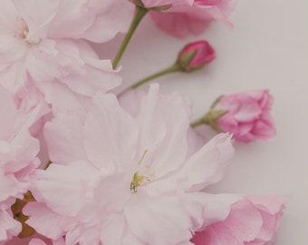 Fine Art Print, Flower Photo, Pear Blossoms, Garden Chic Art, Spring, Cottage Art, Floral Art, Botanical Print, Pink Art, Feminine Decor