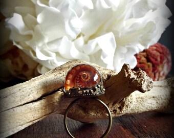 Strawflower Miniature Specimen Ring