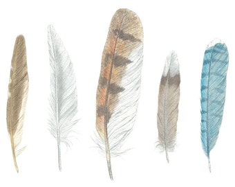 Five Feathers.. a life-sized study in watercolor: 10x8 art print