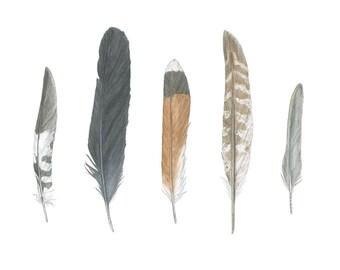 Five Feathers II 8x10 fine art print