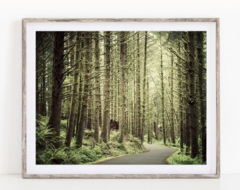 Forest Landscape Photography, Oregon Woodland Nature Photography, Rustic Decor, Tree Wall Art Print, Wall Decor