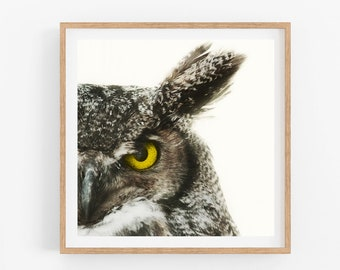 Horned Owl, Owl Print, Nature Photography, Bird Wall Art, Minimalist Nature Print, Bird Print, Bird Lover Gift, Animal Print