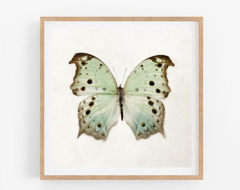Square Butterfly Print, Wall Art, Nature Photography Print, Modern Minimal Home Decor, Mint Green, Spring Decor, Square Art, Butterfly Photo