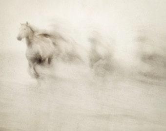 Horse Art Prints