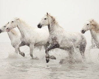 Fine Art Photography, Horse Photography Print, Nature Photography, Horse Art, White Horses Running in Water Winter Nature Print - Breathless