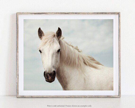 Animal Nature Mare Print  NEW POSTER White Snow Horse