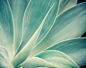 "Agave Photograph, Cactus Print, Nature Photography Print, Blue Green Tropical Decor, Botanical Print, Desert Print ""Desert Flower"""