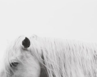 """Horse Photography, Minimalist Black and White Print, Fine Art Photography, Modern Nature Photography, White Horse Photo, Winter """"Apparition"""""""
