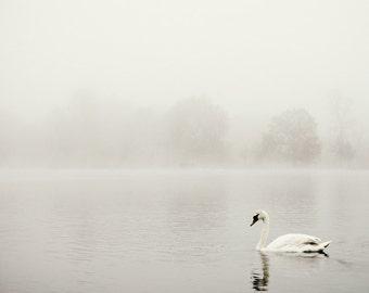 White Swan Photograph, Nature, Fine Art Photography Print, Nature Photography, Swan Gift, Bird Print, Nature Print, Minimalist Wall Art