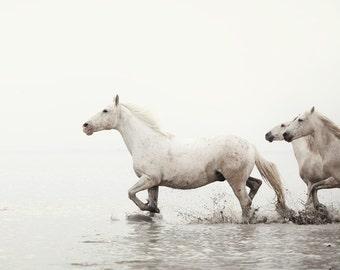 "Wild Horse Photography, Horse Wall Art, Equine Print, White Horse Photo, Camargue, France, White Wall Decor, Home Decor ""Walking Softly"""