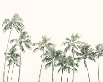 "Palm Print, Modern Tropical Decor, Summer, Beach Decor, Palm Trees, Hawaii Print, Tree Wall Art, Landscape Photography  ""Palmetto"""