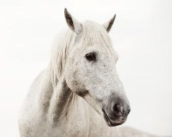 "White Horse Photograph, Nature Photography, Horse Decor, Neutral Wall Art, Minimalist Art Print, ""White on White #2"""