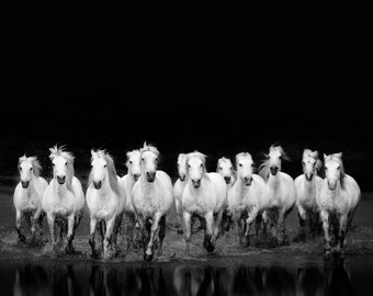 """Black and White Photography, Horse Print, Fine Art Photography, Nature Photography Print, Statement Art, Nature Print """"Wild Ones"""""""