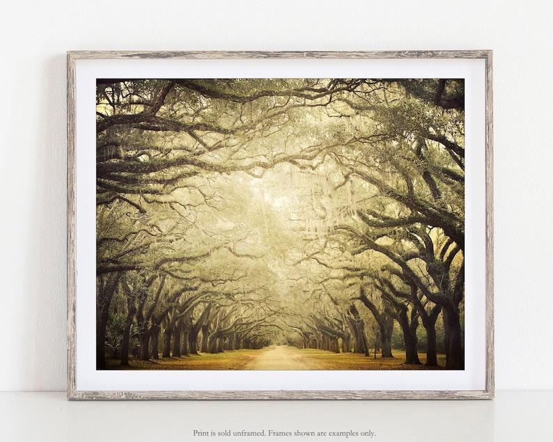 Landscape Photography Rustic Decor Tree Wall Art Print Fall image 1
