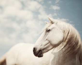 """Horse Art, Large Wall Art Print, Nature Photography Print, Horse Decor, White Horse, Animal Print, Nature Print """"Wild is the Wind"""""""