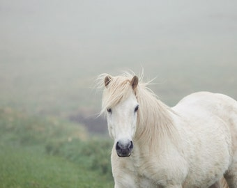 """Horse Photography Print, Nature Lover Gift, Nature Print, Nature Photography, Horse Art, Icelandic Horse Print """"On a Pale Horse"""""""