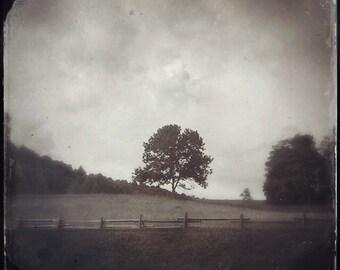 The Listening Tree, Virginia, Serene, Peaceful, Wall Art, Photograph, Fine Art Photography, Sepia, Countryside