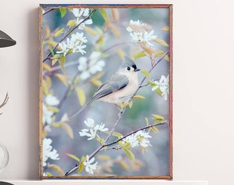 Tufted Titmouse Bird Photography Print, Nature Photography Bird Print, Bird Art Print, Bird Photo, Woodland, Tufted Titmouse in Spring