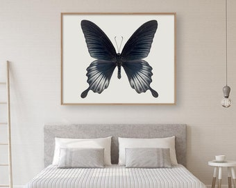Black Butterfly Print, Nature Photography, Natural History Art, Large Wall Art Print, Butterfly Wall Art, Insect Art, Photography Print