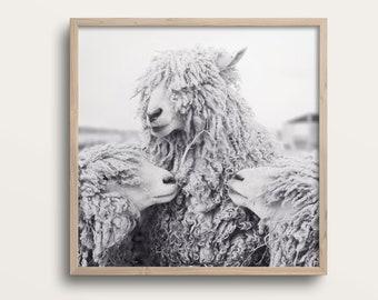 Sheep Art, Animal Photography, Sheep Photograph, Animal Art Print, Black & White Photography Print, Wall Decor