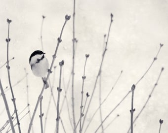 Little Chickadee, 7x7 Black and White Print - Free Shipping