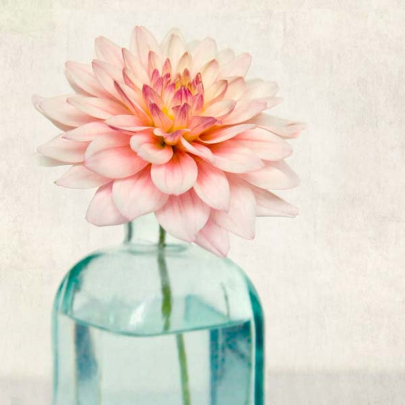 5x5 Print Set Photo Collection Affordable Art Prints Flower Photography 5x5 Photos Floral Still Life Mini Portfolio