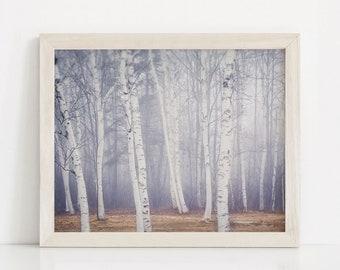 Birch Tree Art Print, Nature Photography Print, Bedroom Wall Decor, Living Room Decor, Bedroom Wall Art, LivingRoom Art, Peaceful Wall Art