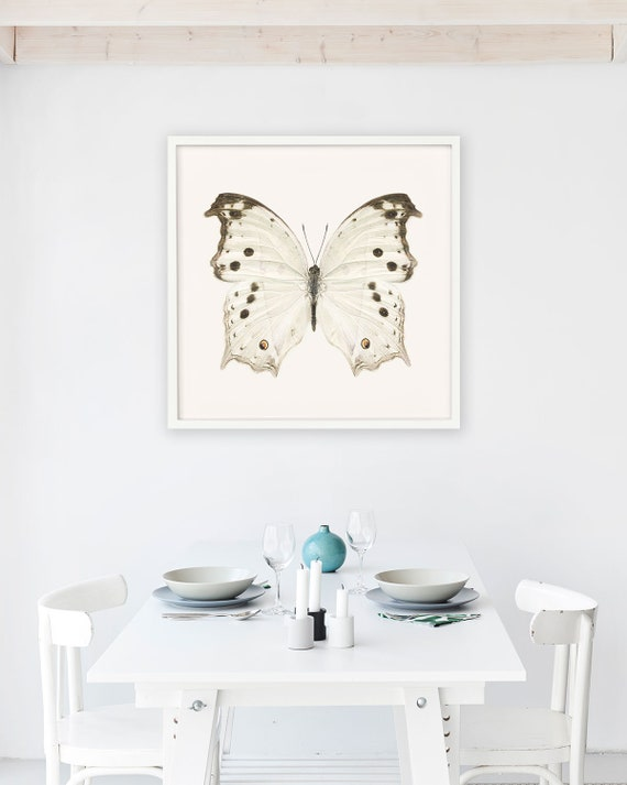 Butterfly Print Wall Art Nature Photography Neutral White | Etsy