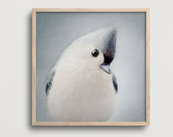 Bird Art Print, Nursery Wall Art, Living Room Wall Art, Bedroom Wall Decor, Office Wall Art for Women, Tufted Titmouse, Photography Print