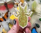 """Leaf Insect (Phyllium giganteum) 2.29"""" x 3"""" Sticker"""